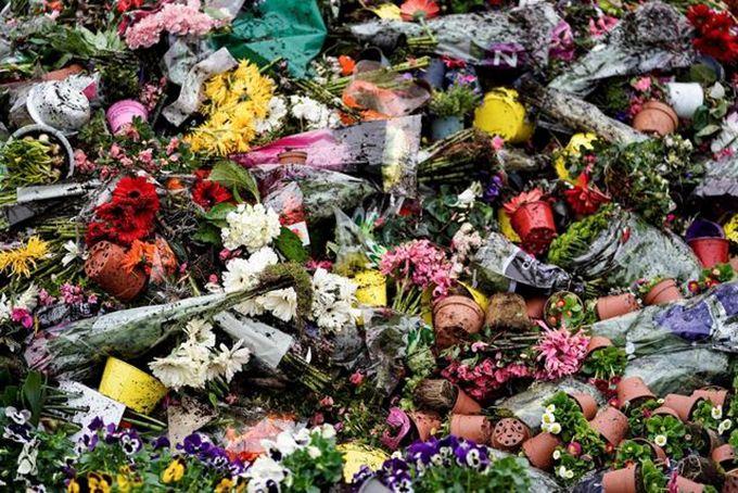 荷兰销毁百万束鲜花是怎么回事?呼吁少抢厕纸多买花