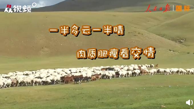 蒙古国牧场实拍捐赠给中国的羊插图(1)