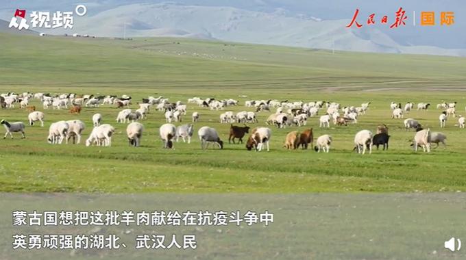 蒙古国牧场实拍捐赠给中国的羊插图(2)