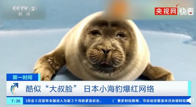 日本小海豹酷似大叔脸爆红 经网友票选后被取名