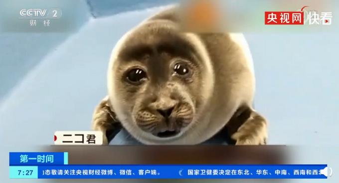 日本小海豹酷似大叔脸爆红是怎么回事?什么情况?终于真相了,原来是这样!