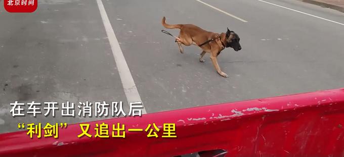 """泪目!训导员离队搜救犬紧紧追车不愿离去,一句""""战友再见""""看哭网友"""
